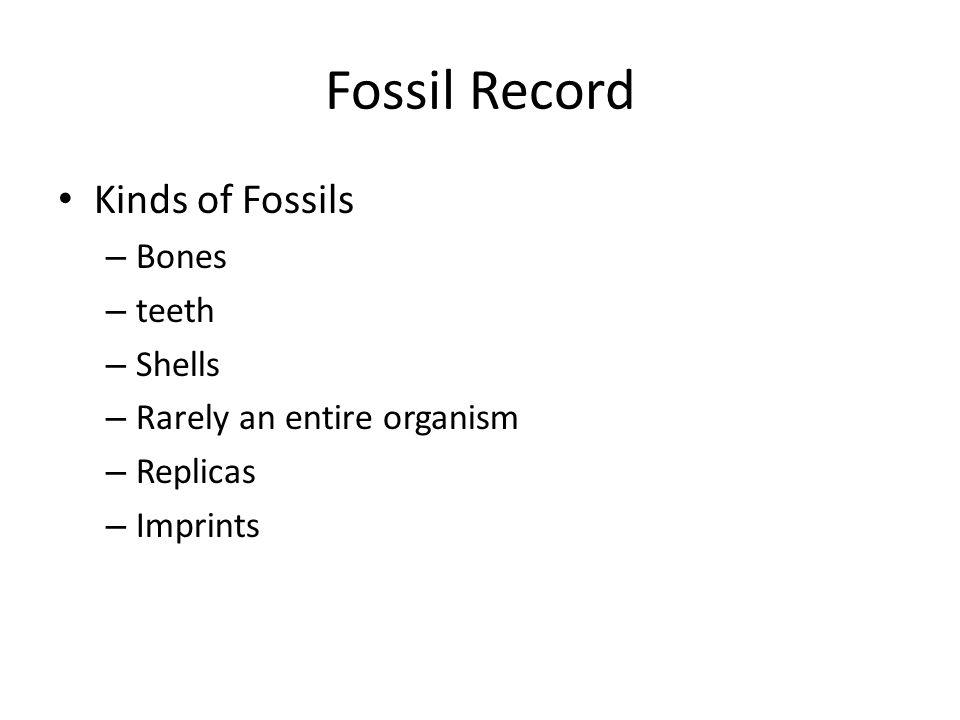 Fossil Record Kinds of Fossils Bones teeth Shells