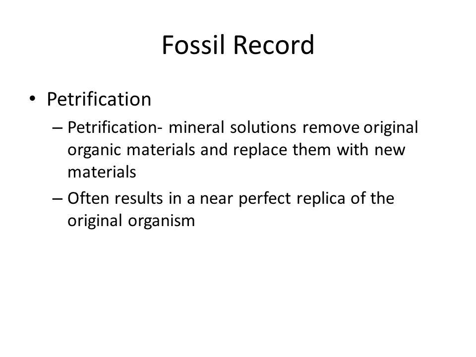Fossil Record Petrification