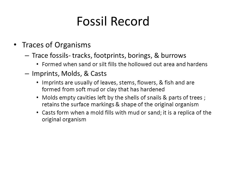 Fossil Record Traces of Organisms