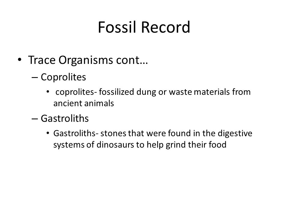 Fossil Record Trace Organisms cont… Coprolites Gastroliths