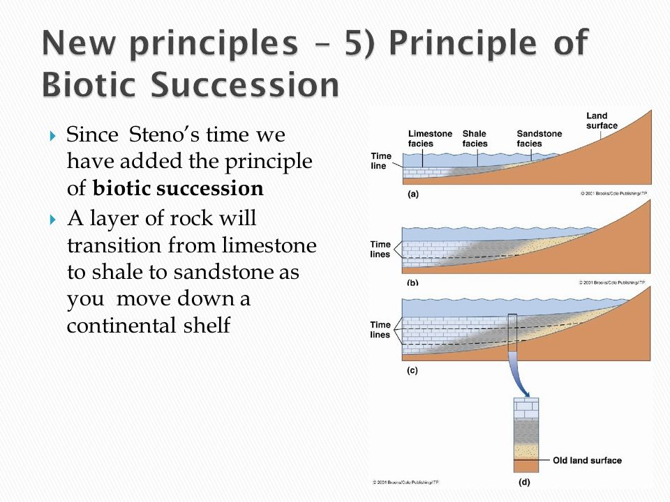 New principles – 5) Principle of Biotic Succession