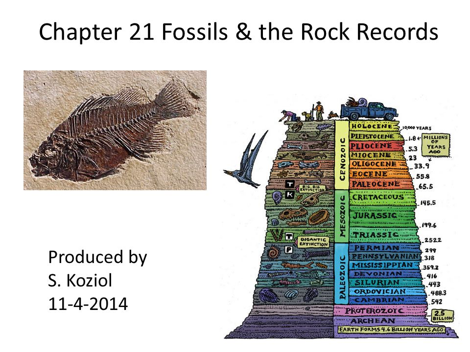 Chapter 21 Fossils & the Rock Records