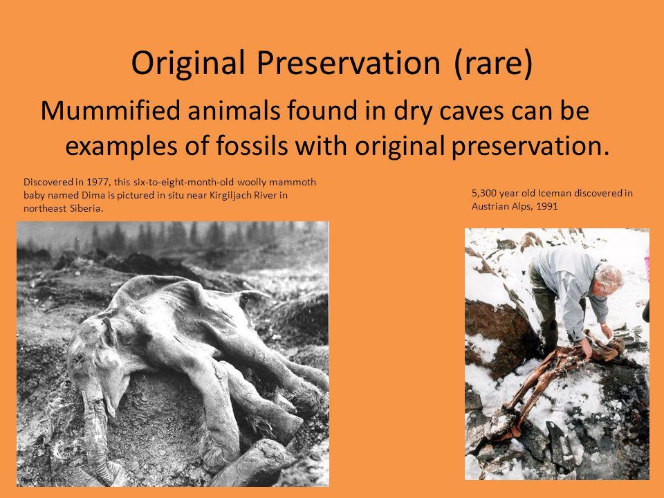 Original Preservation (rare)