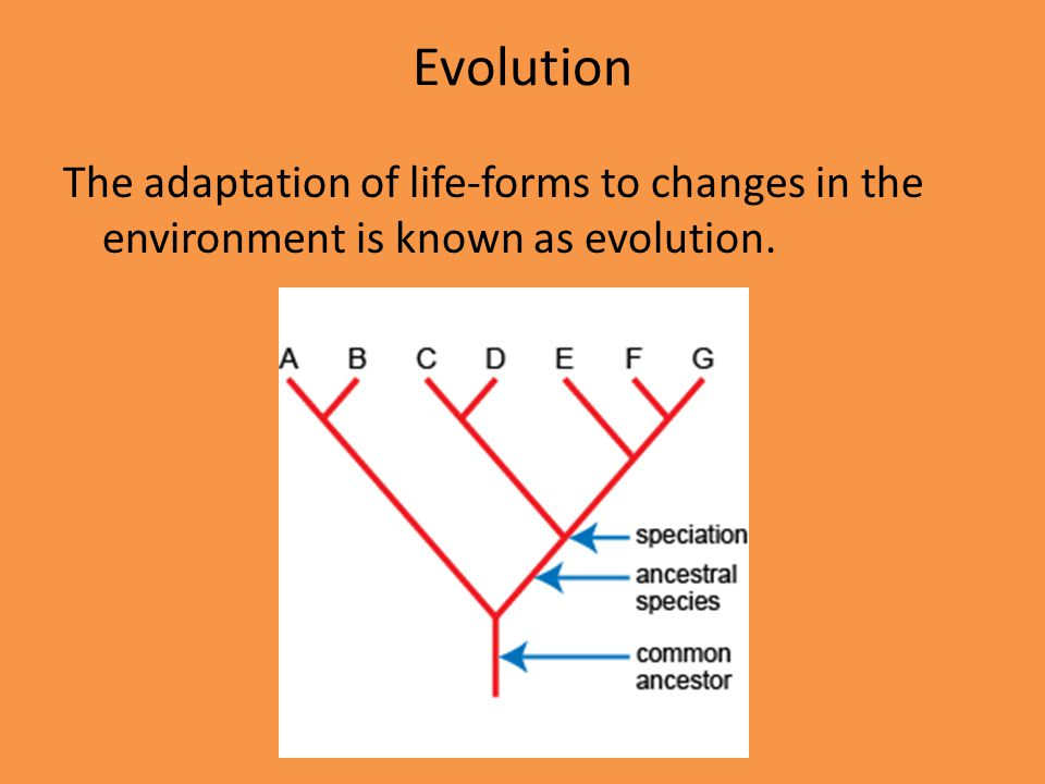 Evolution The adaptation of life-forms to changes in the environment is known as evolution.