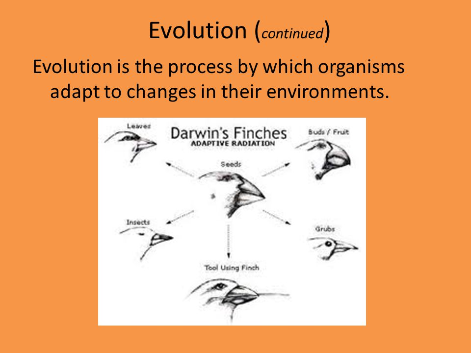 Evolution (continued)