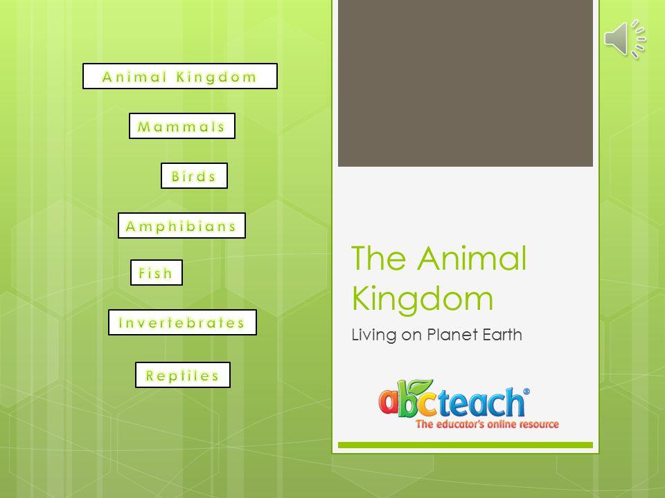 The Animal Kingdom Living on Planet Earth Animal Kingdom Mammals Birds