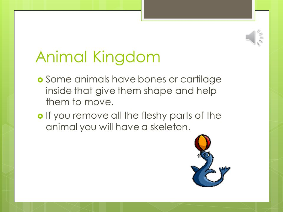 Animal Kingdom Some animals have bones or cartilage inside that give them shape and help them to move.