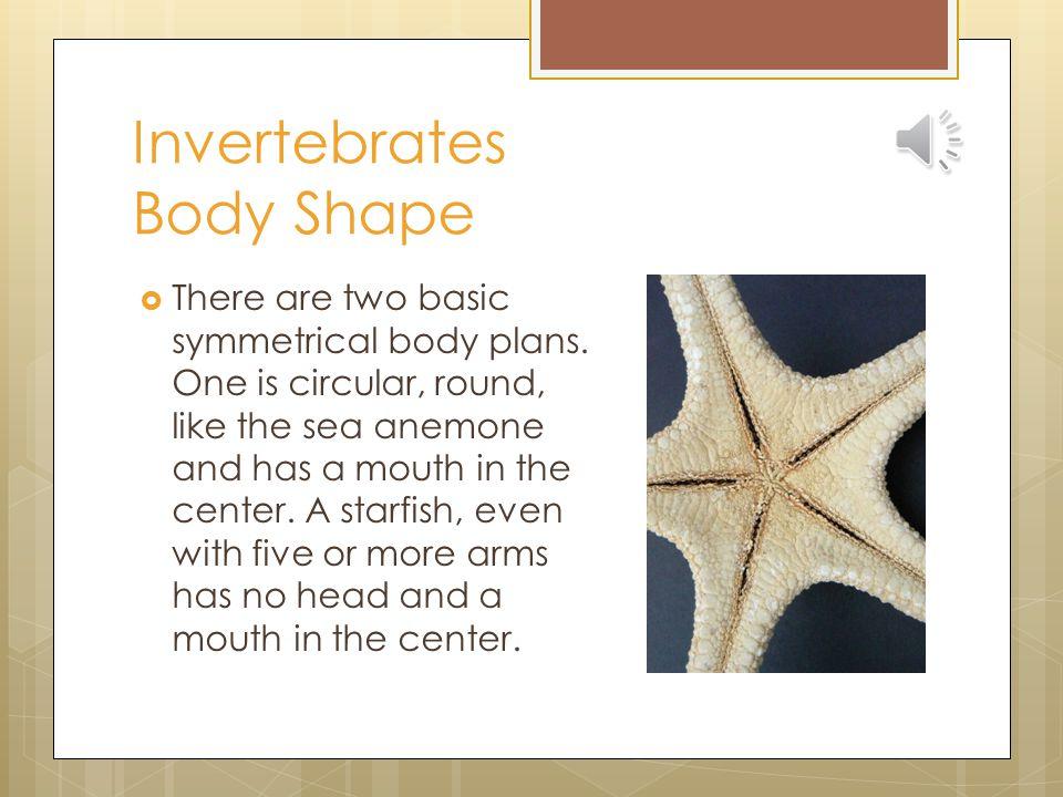 Invertebrates Body Shape