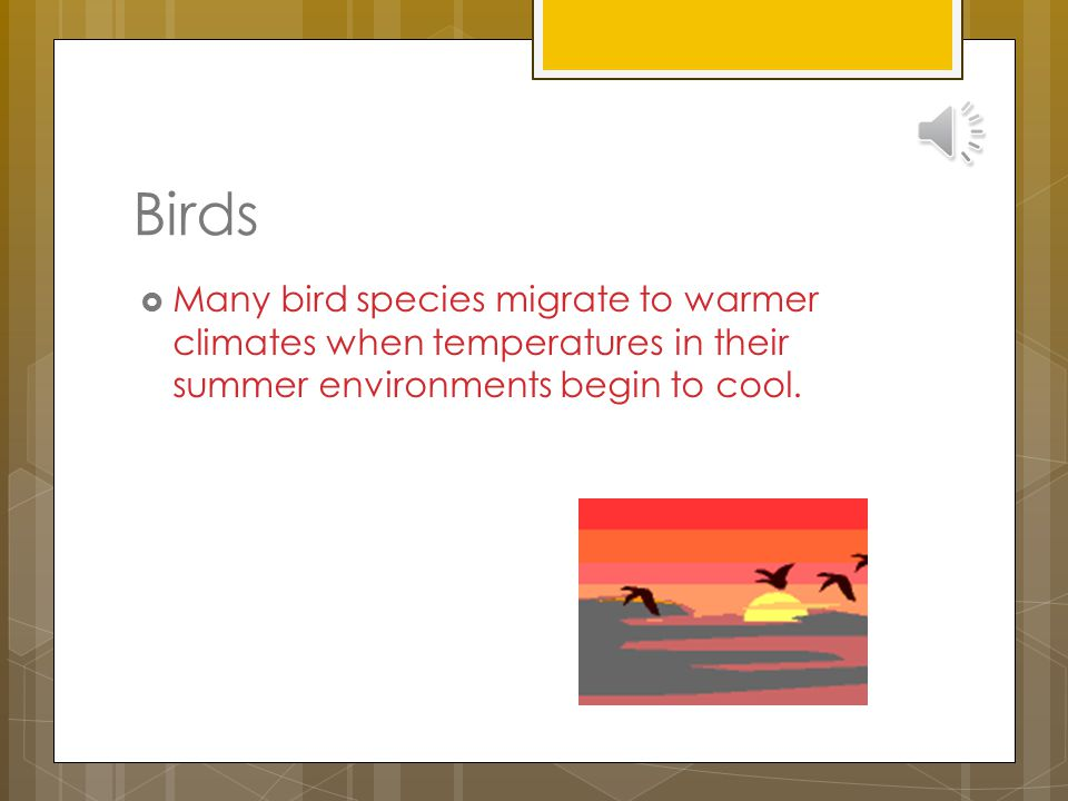 Birds Many bird species migrate to warmer climates when temperatures in their summer environments begin to cool.
