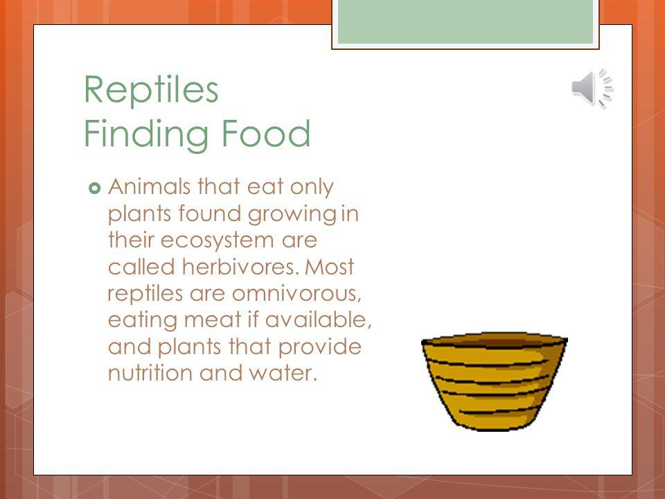Reptiles Finding Food