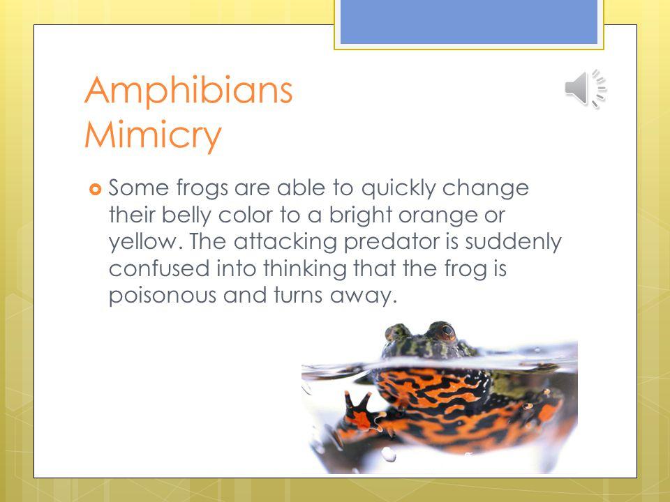 Amphibians Mimicry