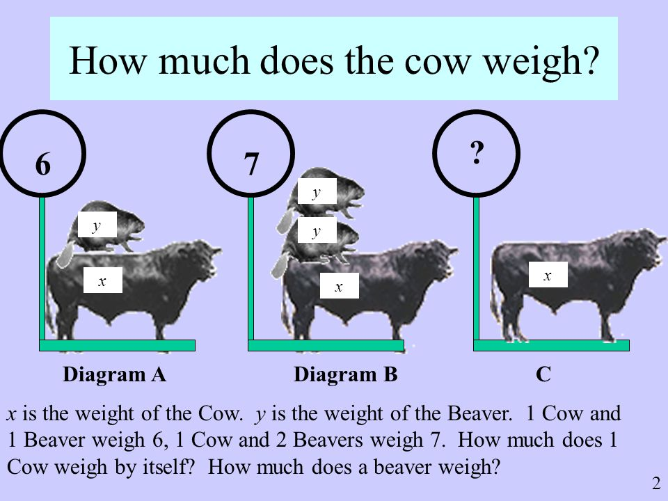 How much does the cow weigh