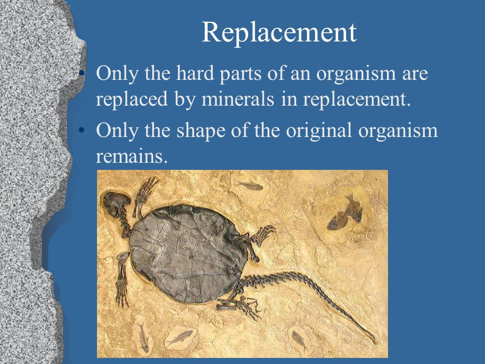 Replacement Only the hard parts of an organism are replaced by minerals in replacement.