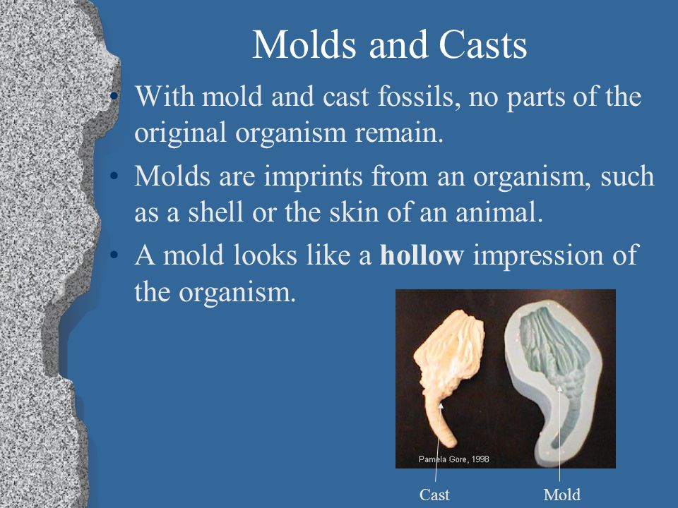 Molds and Casts With mold and cast fossils, no parts of the original organism remain.