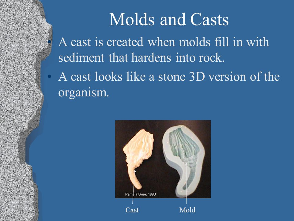 Molds and Casts A cast is created when molds fill in with sediment that hardens into rock. A cast looks like a stone 3D version of the organism.