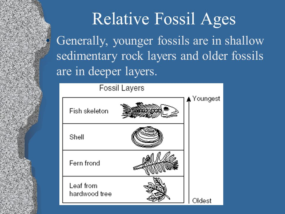 Relative Fossil Ages Generally, younger fossils are in shallow sedimentary rock layers and older fossils are in deeper layers.