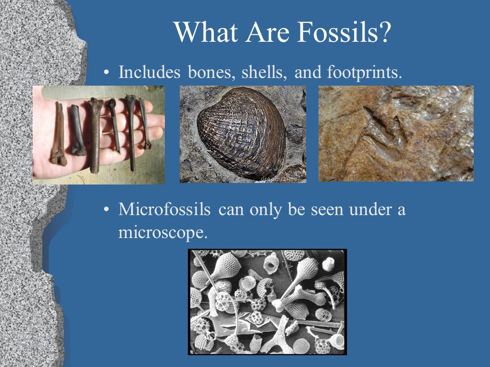 What Are Fossils Includes bones, shells, and footprints.