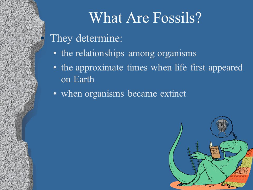 What Are Fossils They determine: the relationships among organisms