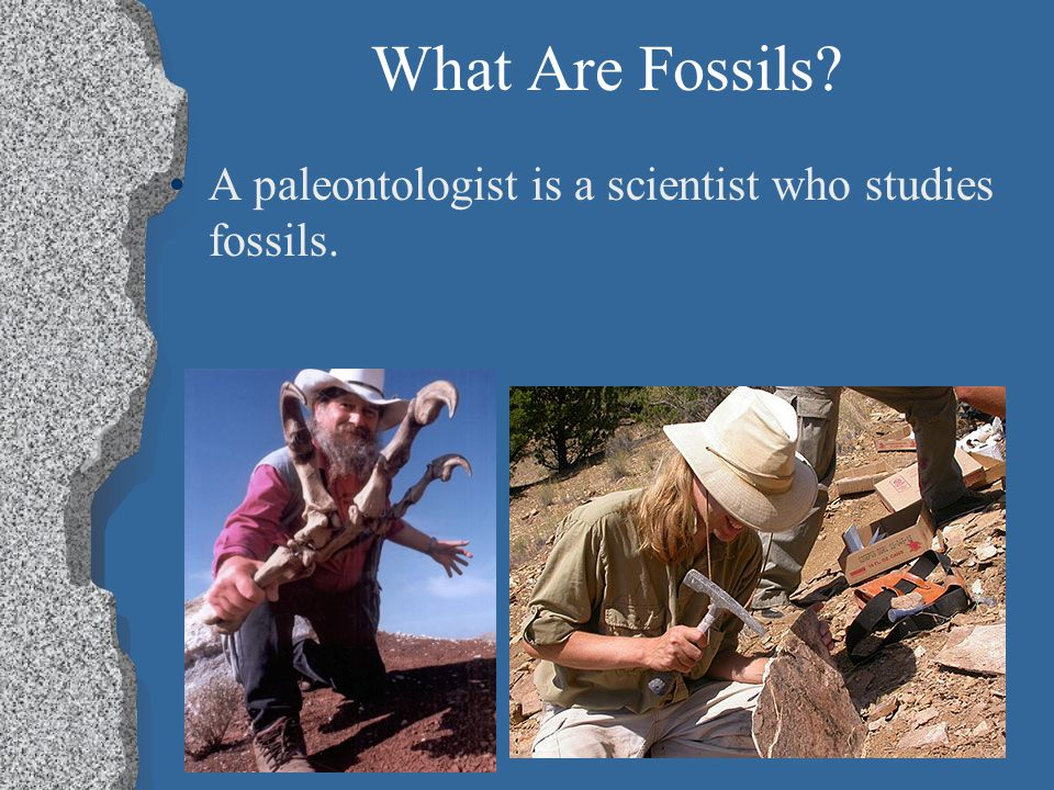 What Are Fossils A paleontologist is a scientist who studies fossils.