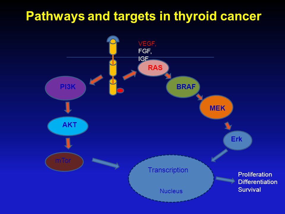 Pathways and targets in thyroid cancer