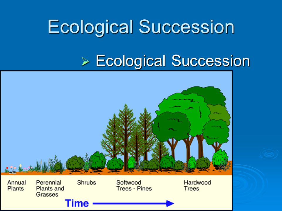 Glossary of ecology