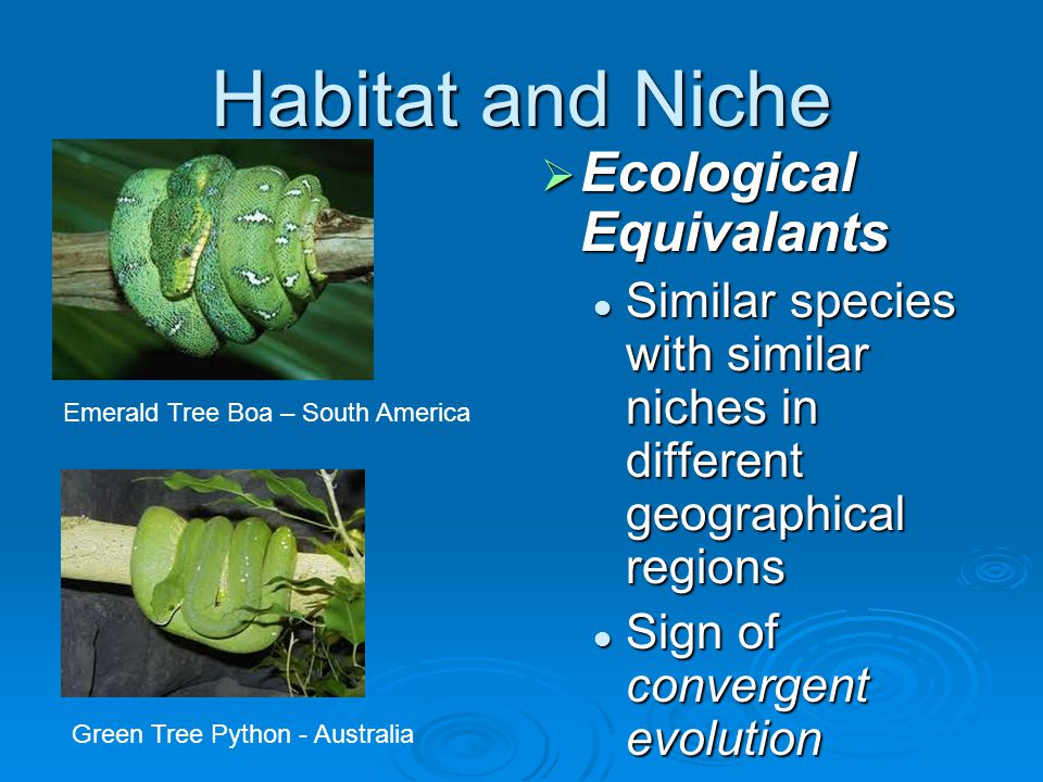 Habitat and Niche Ecological Equivalants