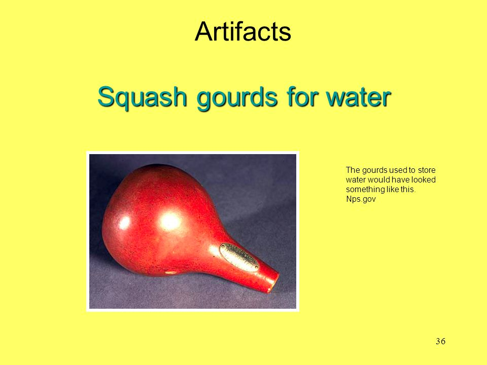 Artifacts Squash gourds for water
