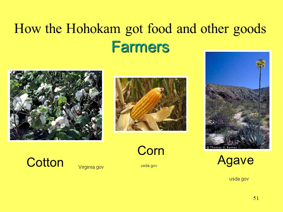 How the Hohokam got food and other goods Farmers