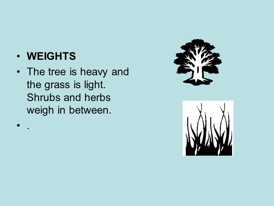 WEIGHTS The tree is heavy and the grass is light. Shrubs and herbs weigh in between. .