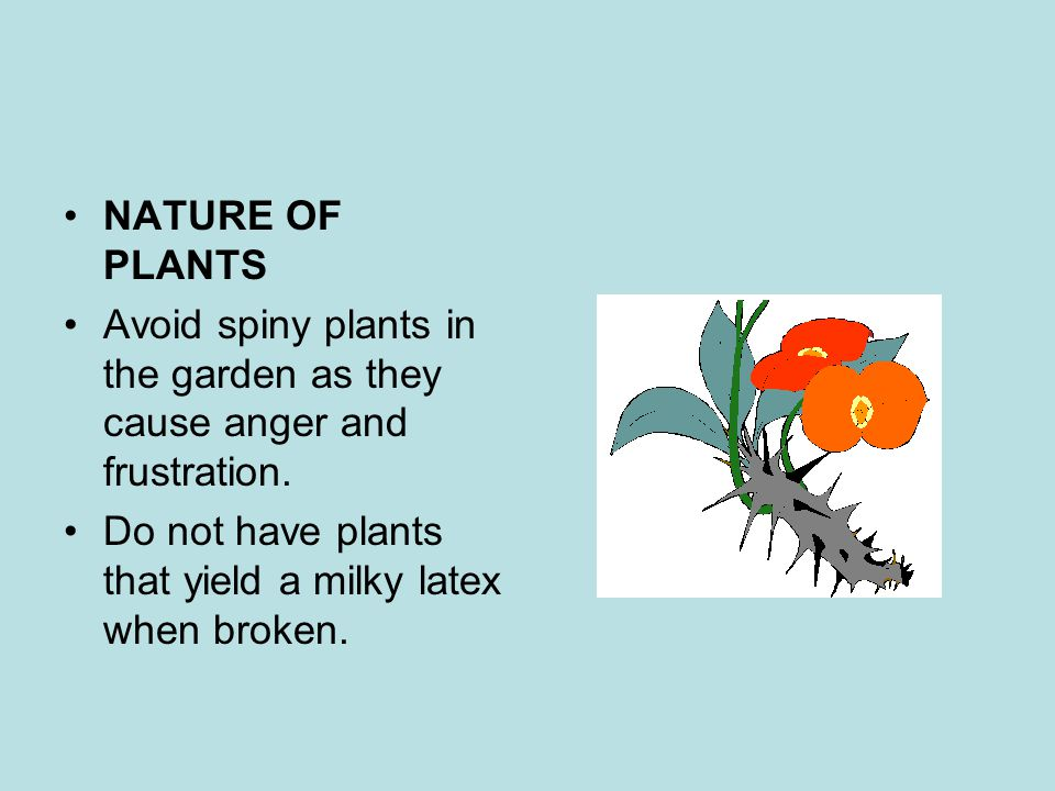 NATURE OF PLANTS Avoid spiny plants in the garden as they cause anger and frustration.