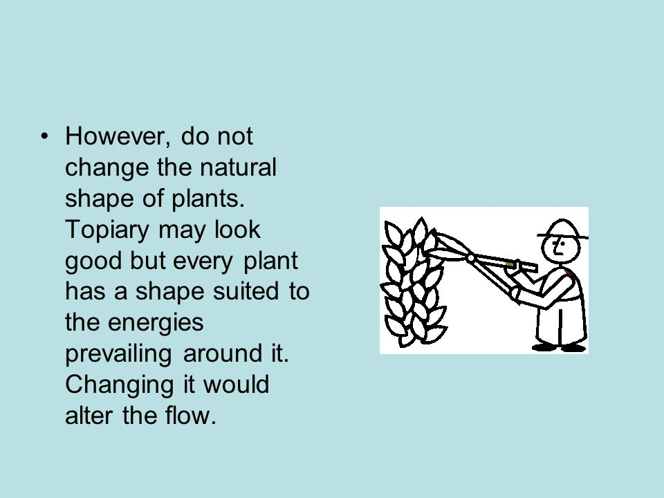 However, do not change the natural shape of plants
