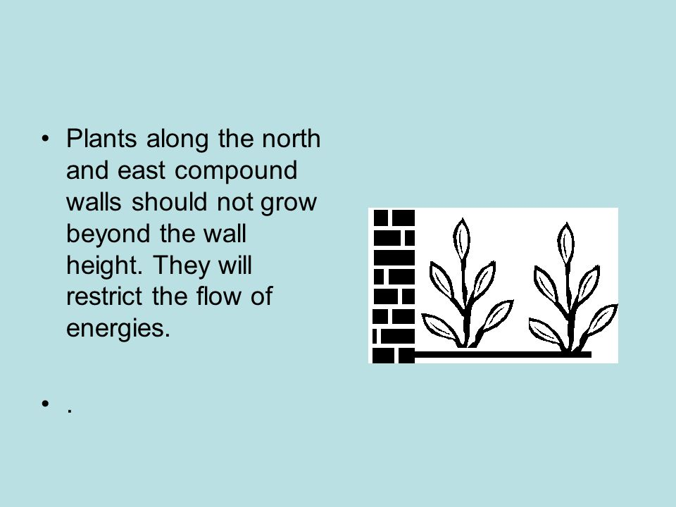 Plants along the north and east compound walls should not grow beyond the wall height. They will restrict the flow of energies.