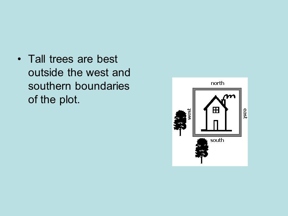 Tall trees are best outside the west and southern boundaries of the plot.