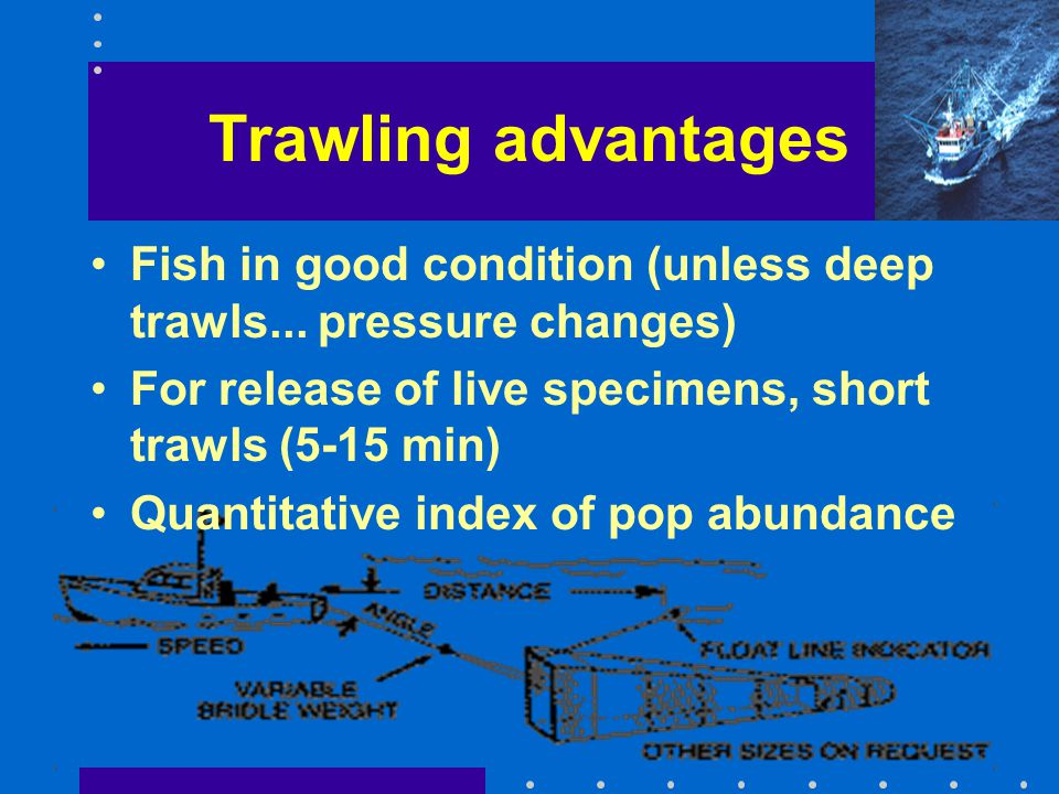 Trawling advantages Fish in good condition (unless deep trawls... pressure changes) For release of live specimens, short trawls (5-15 min)