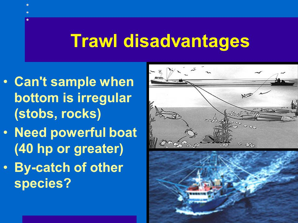 Trawl disadvantages Can t sample when bottom is irregular (stobs, rocks) Need powerful boat (40 hp or greater)