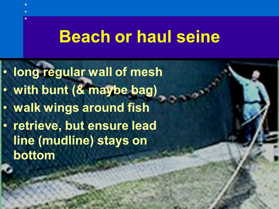 Beach or haul seine long regular wall of mesh with bunt (& maybe bag)