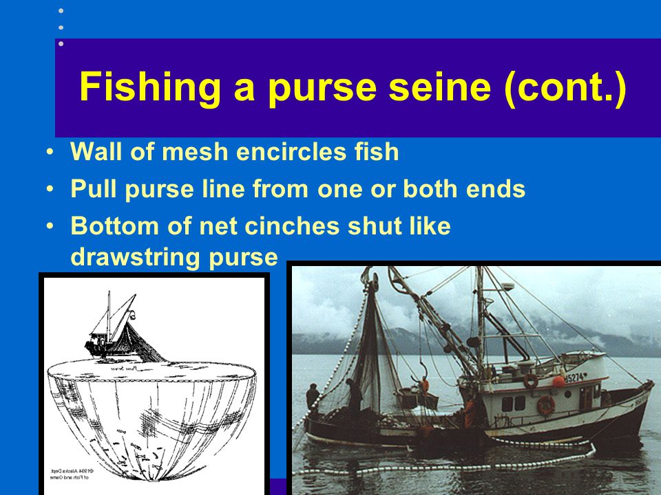 Fishing a purse seine (cont.)