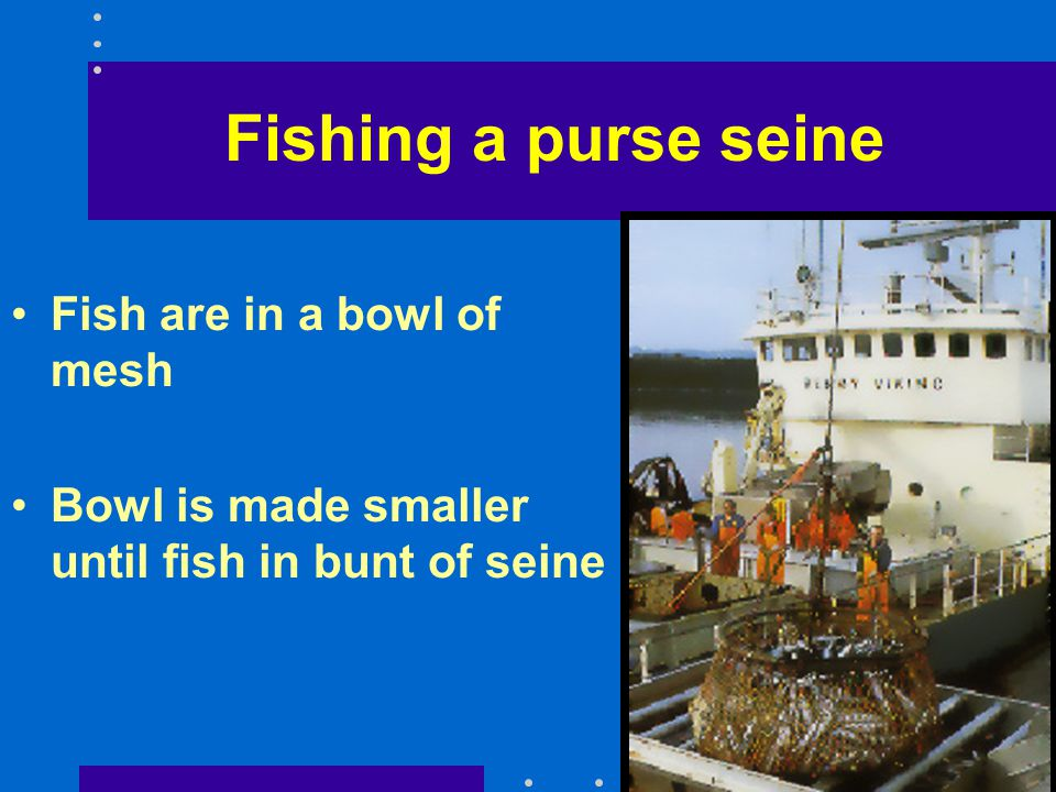 Fishing a purse seine Fish are in a bowl of mesh