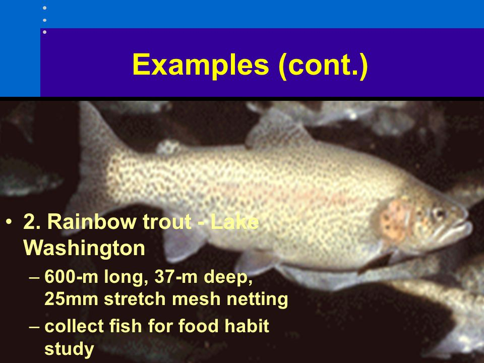Examples (cont.) 2. Rainbow trout - Lake Washington