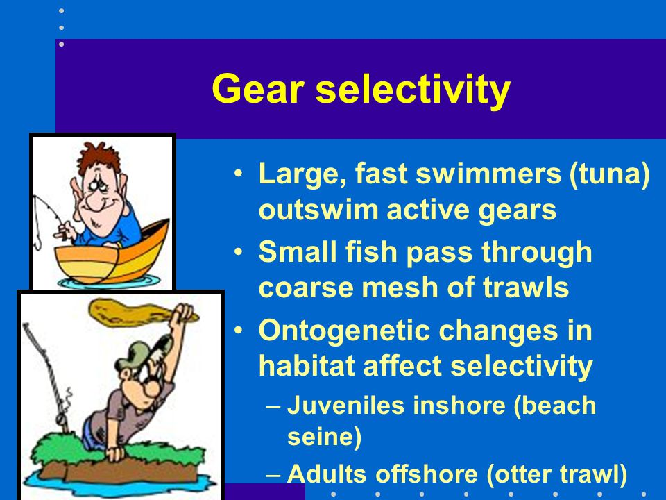 Gear selectivity Large, fast swimmers (tuna) outswim active gears