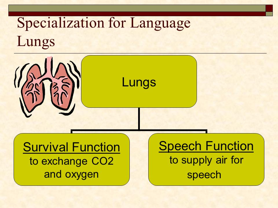 Specialization for Language Lungs