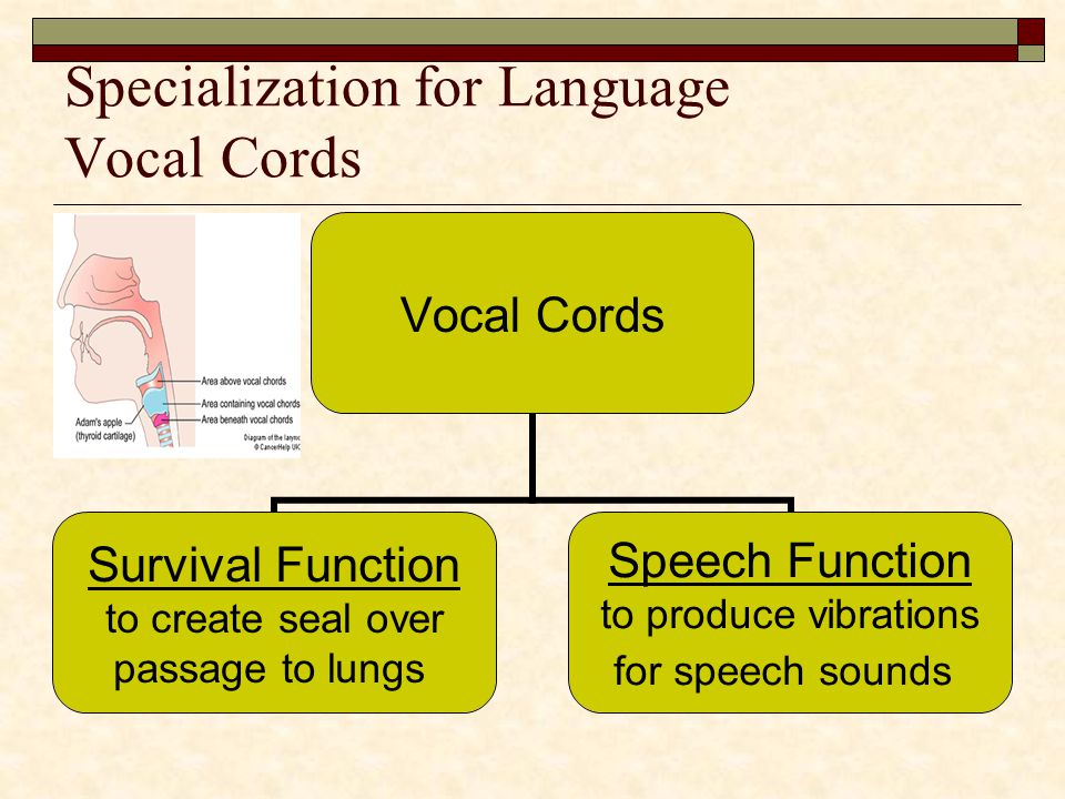 Specialization for Language Vocal Cords