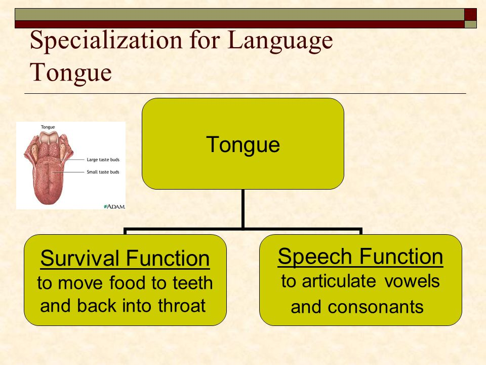 Specialization for Language Tongue