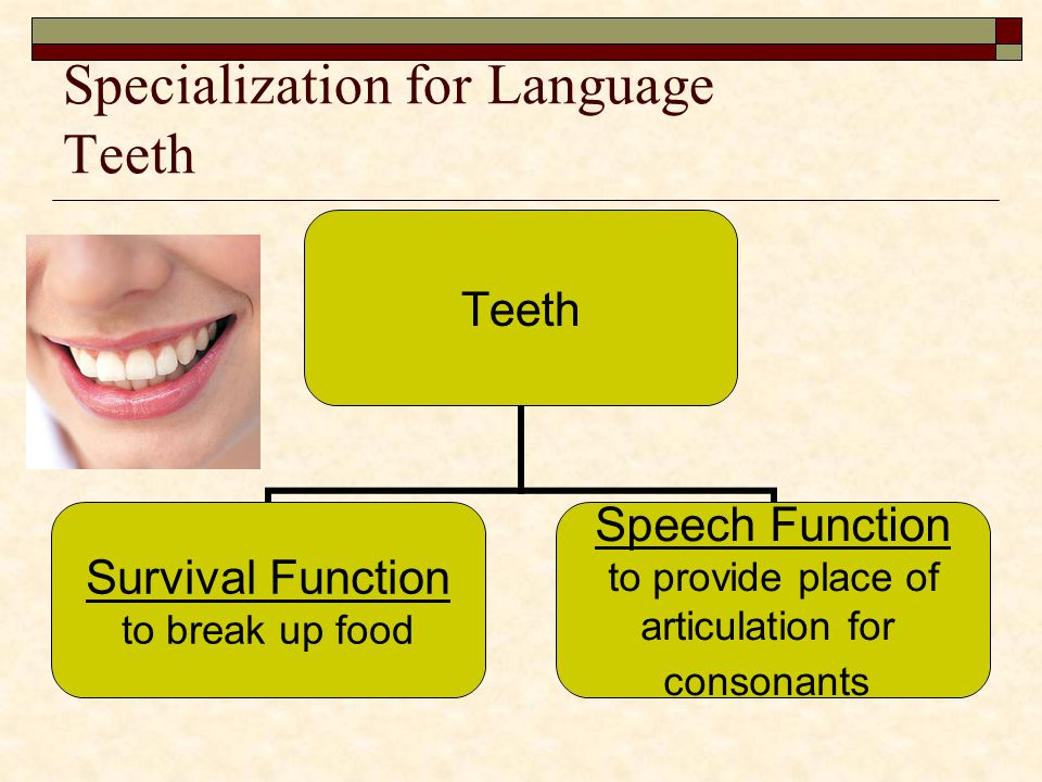Specialization for Language Teeth