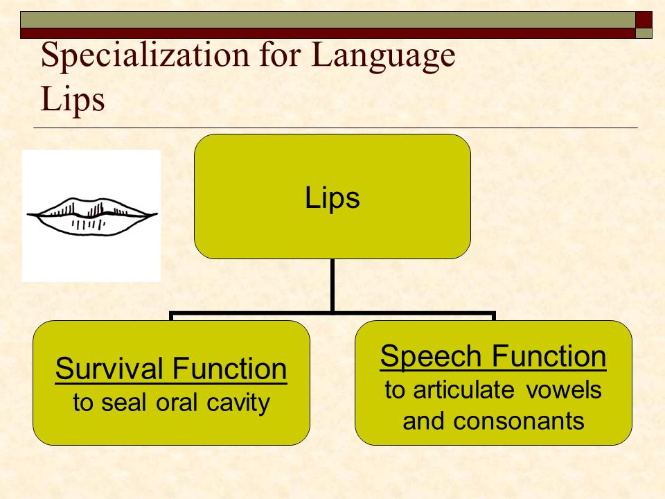 Specialization for Language Lips