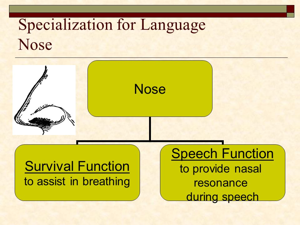 Specialization for Language Nose