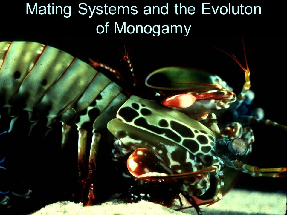 Mating Systems and the Evoluton of Monogamy