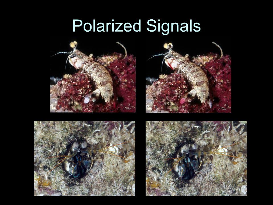 Polarized Signals