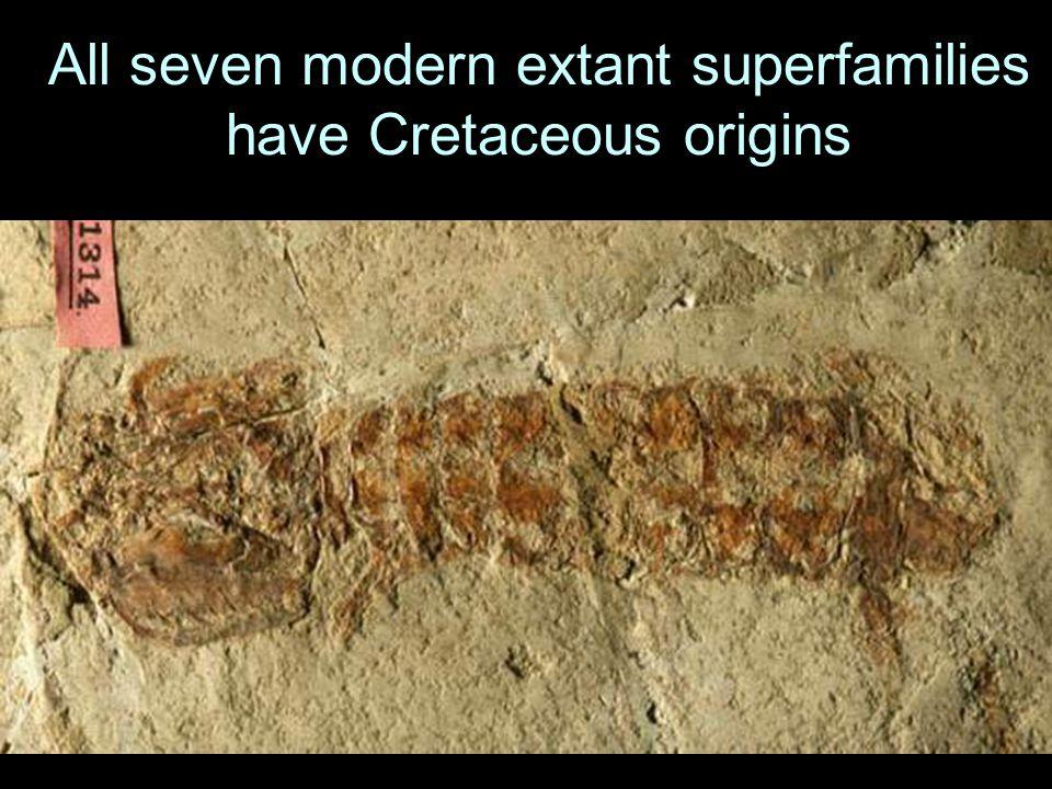 All seven modern extant superfamilies have Cretaceous origins