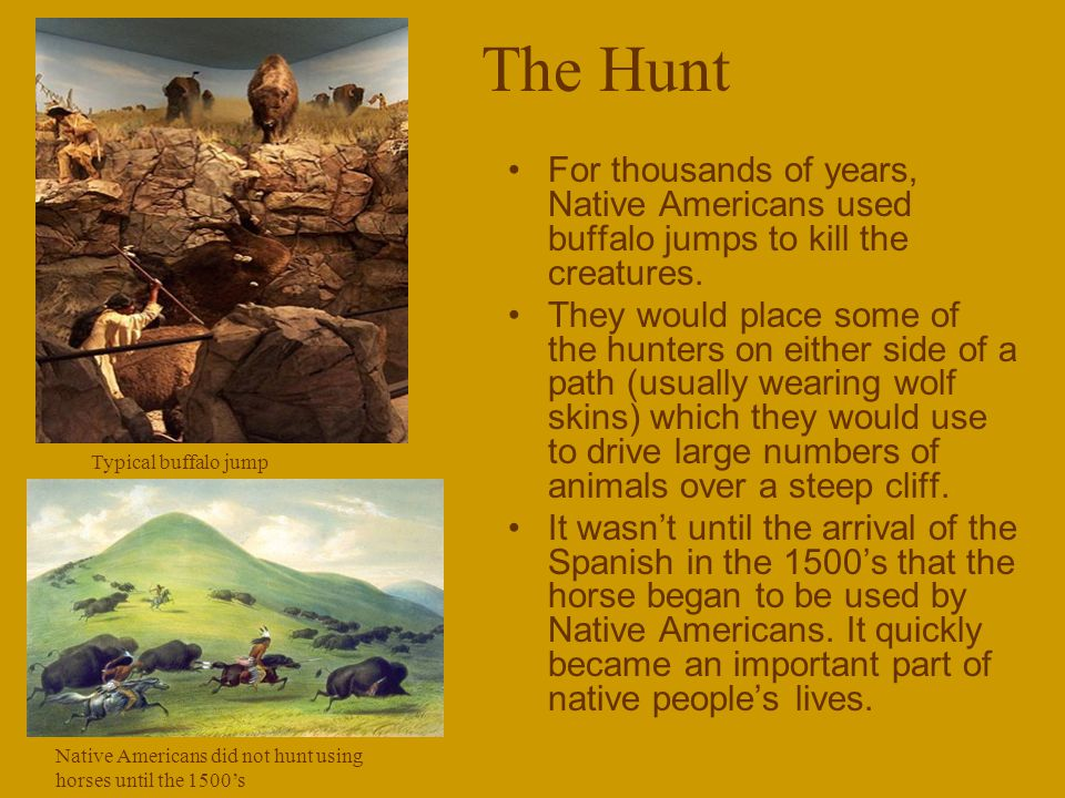 The Hunt For thousands of years, Native Americans used buffalo jumps to kill the creatures.
